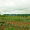 写真: ぜるぶの丘