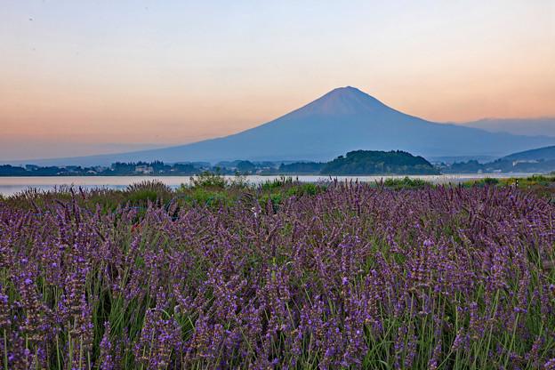 Photos: 薫風の朝