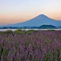写真: 薫風の朝