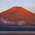 写真: 赤富士の朝