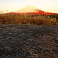写真: 霜柱に富士