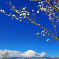 Photos: 雪花