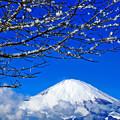 Photos: 冬に咲く花