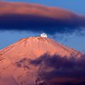 Photos: 紅富士パール