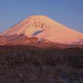 Photos: 新雪の朝