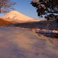 Photos: 雪の朝