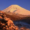 Photos: 薄雪の朝