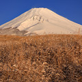 Photos: 雪の原