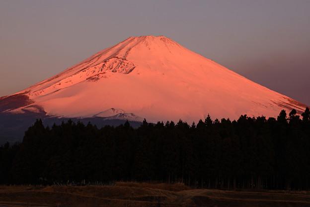 紅富士の朝