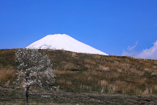 Photos: 丘を越えて