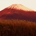 Photos: 初冠雪の朝