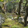 Photos: 興聖寺