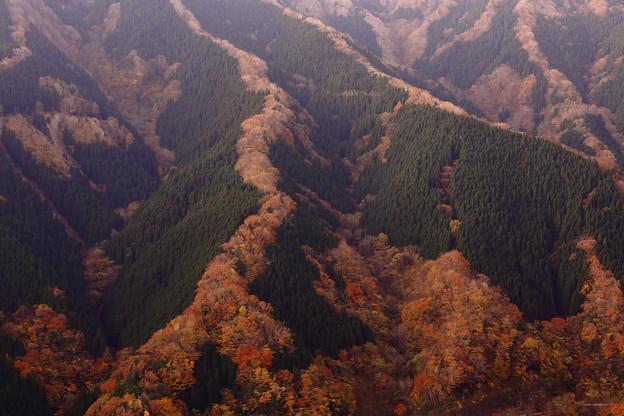 Photos: 昇り龍