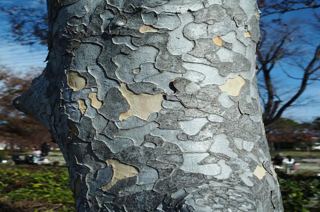 パッチワークの木?