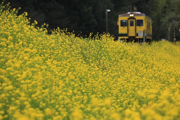 Photos: 春爛漫