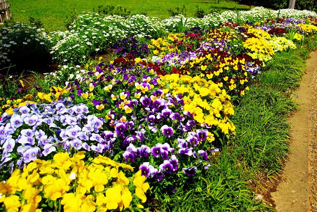 季節の花?