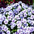 Photos: 季節の花?
