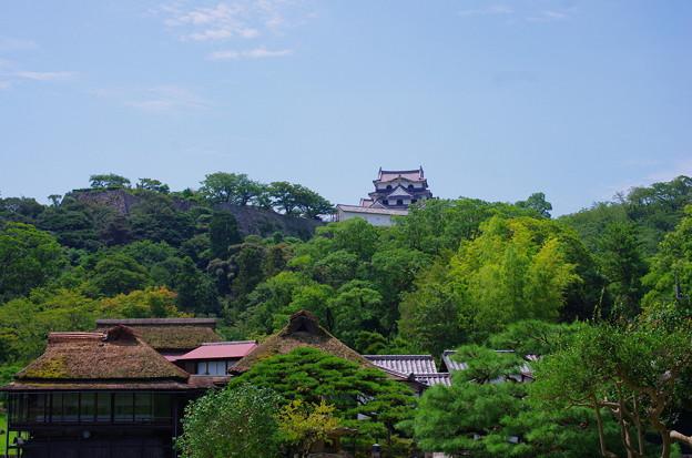 Photos: 彦根城_玄宮園から望む大天守