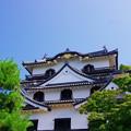 Photos: 彦根城_大天守?