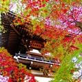 高幡不動尊の鐘楼と紅葉