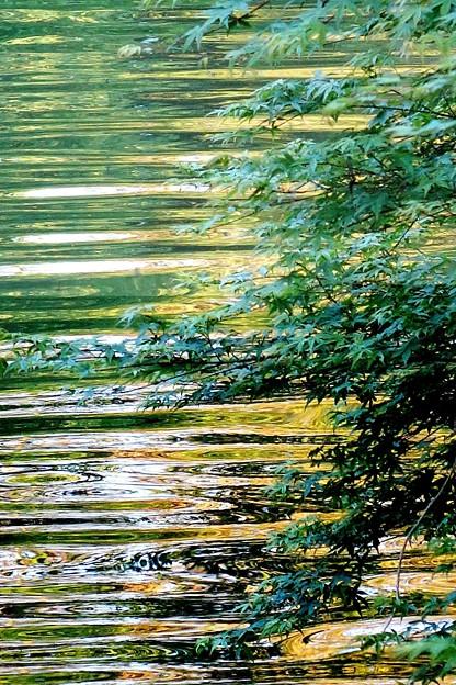 緑道公園の川