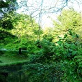 写真: 緑道公園
