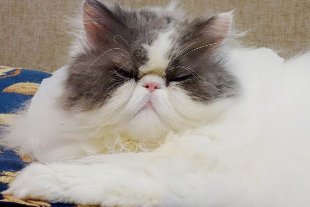 写真: 眠いの
