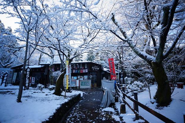 京都-円山公園