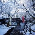 写真: 京都-円山公園