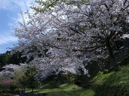 古刹にも春の賑わい