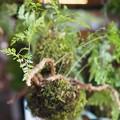 苔玉の風鈴