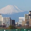 多摩川河川敷からの富士山