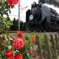 写真: 初夏の花々 6カット