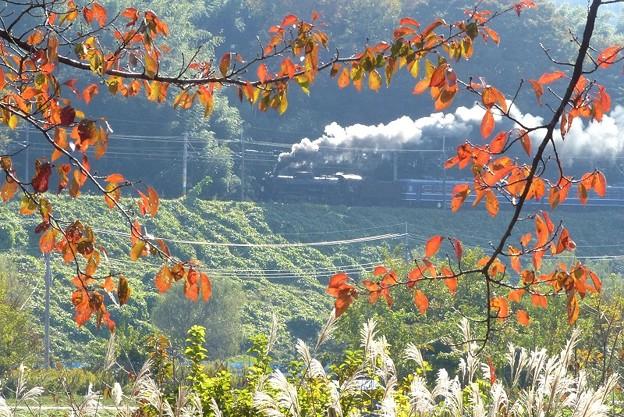 秋彩の沿線 5カット