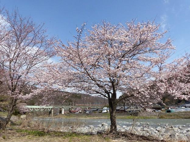 桜咲く。 6カット