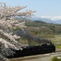 Photos: 諏訪峡桜 5カット