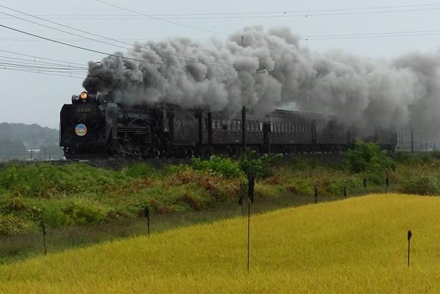 Photos: 最新7カット ~秋雨の上越線~