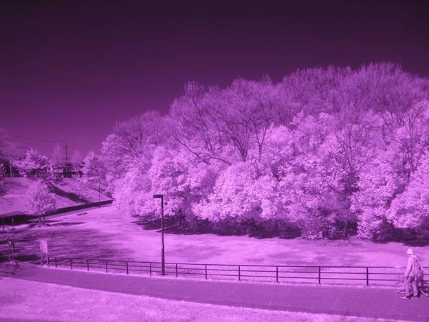 何でもない風景も赤外線なら、こんな風