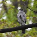 ツミ嬢-桜の散った林で-1