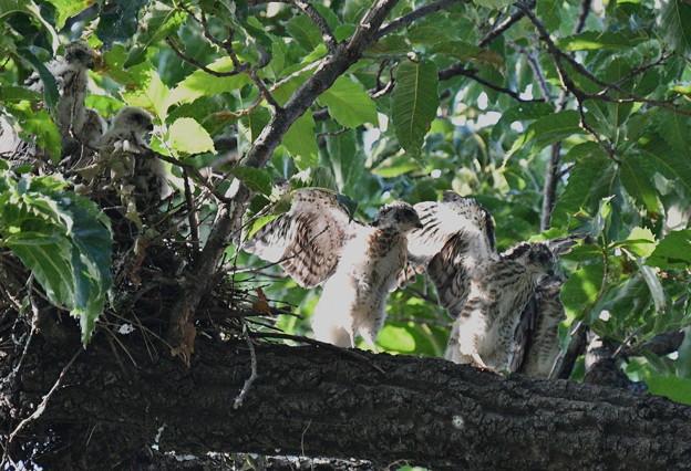 5羽の幼鳥
