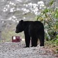 Photos: ♪ 熊さんに出会った~2