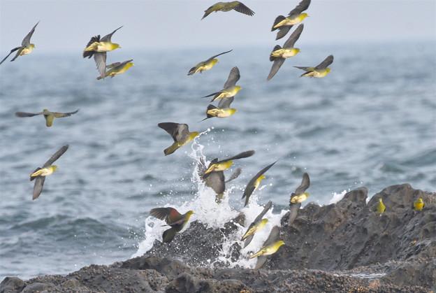 Photos: アオバト-夏恒例の海で-1
