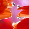 写真: Dewdrops