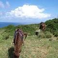 写真: 与那国馬に乗る