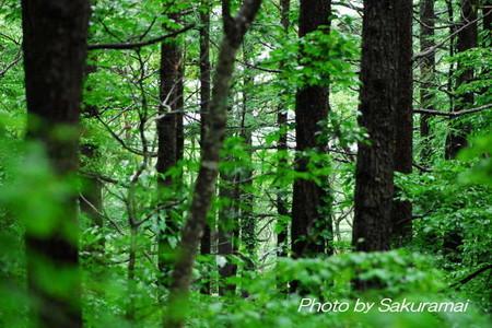 雨あがりの森の緑