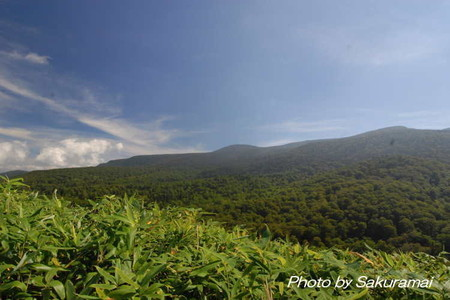 峠からの西吾妻山