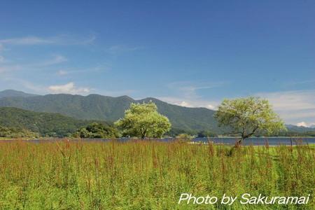 草・木・湖