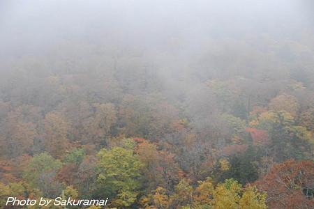 霧中の紅葉