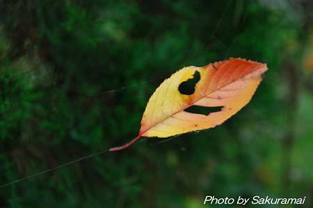 宙ぶらりんの落ち葉