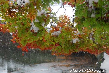 冬の池に紅葉